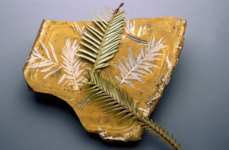 fossil with leaf on top