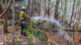 firefighter hosing vegetation