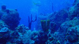 Grand Cayman coral reef