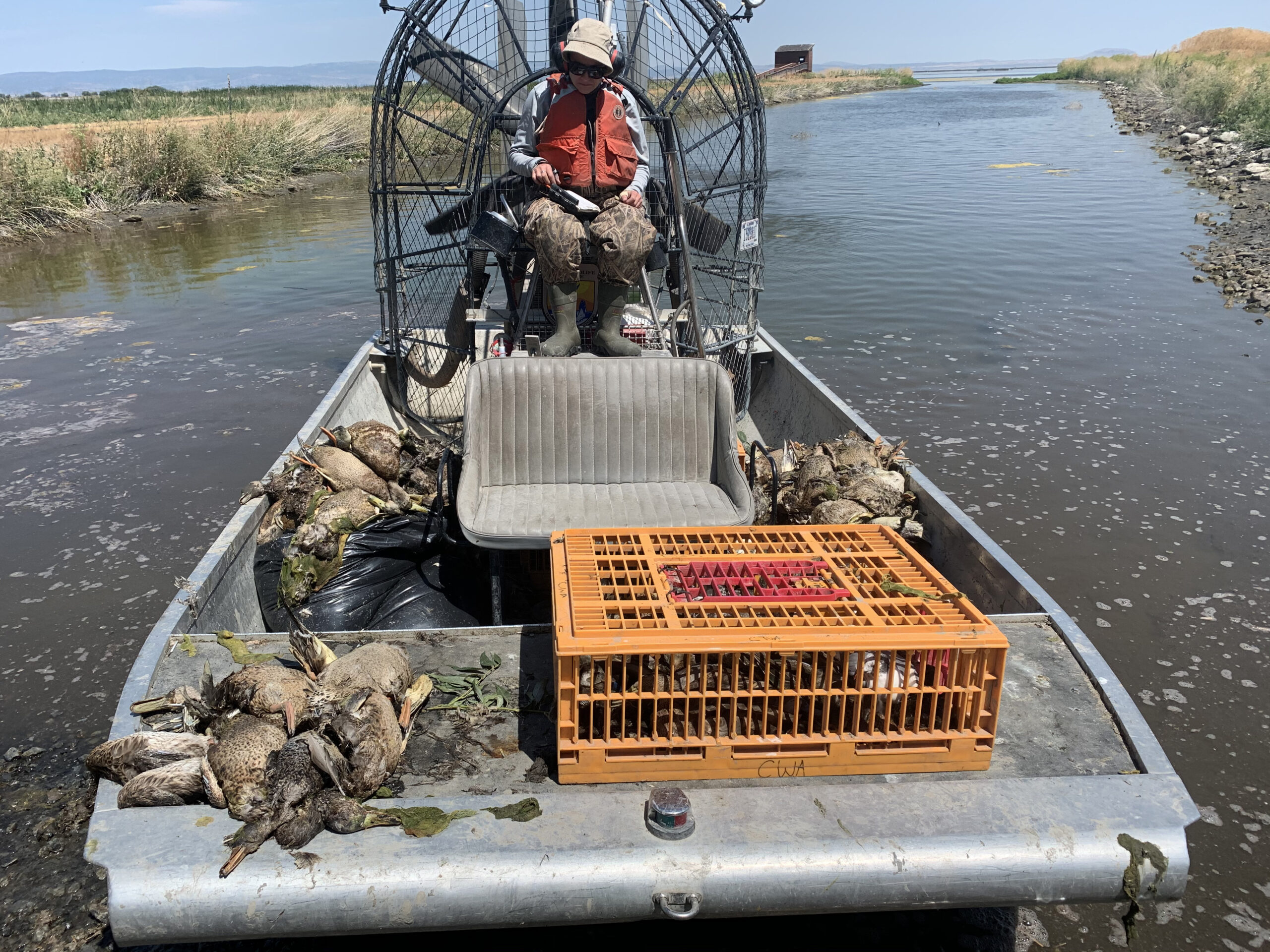 sick ducks on a boat