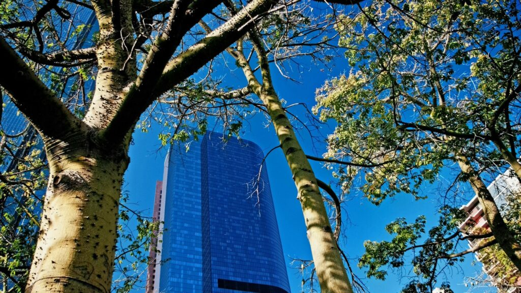 trees and tall building