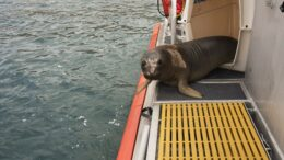 seal on boat deck