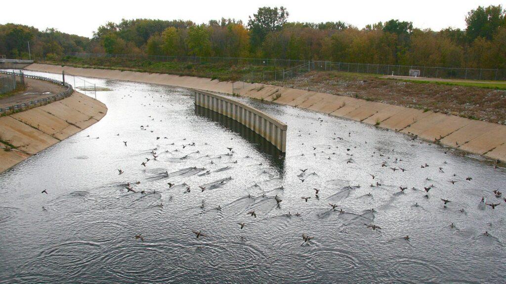 birds in water near outfall