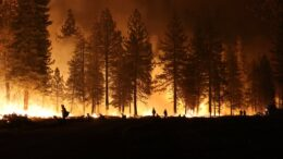 Fire burning in forest on horizon
