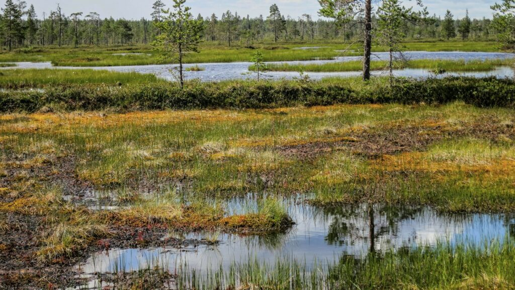 peatland with pools of water