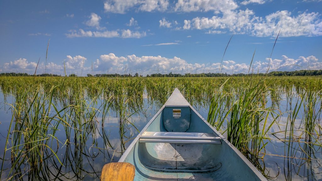 canoe riding through wild rice